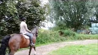 (VIDEO) Meet one of the most beautiful Hackney Horse in the World! - Video