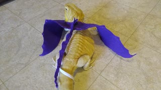Bearded dragon models homemade dragon wings - Video