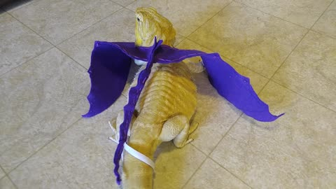 Bearded dragon models homemade dragon wings