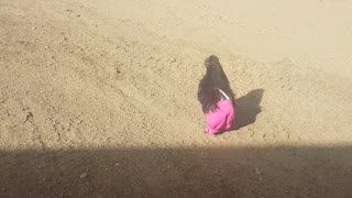Chicken runs around wearing pink pants. Adorable!  - Video
