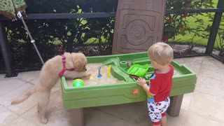 This Toddler Loves Sharing The Sandbox With His Lab Puppy