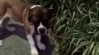 Brown dog sniffs leaf and starts running - Video