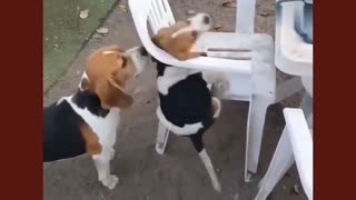 The dog wants to climb into a chair, what happens?