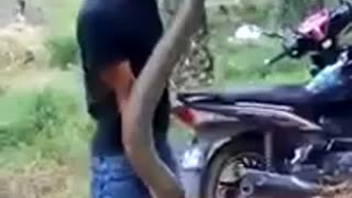 A Brave Boy Caught A Big Snake Beside The Road  - Video