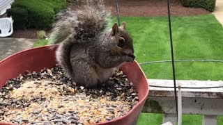 Woman saves mamma squirrel from large abscess