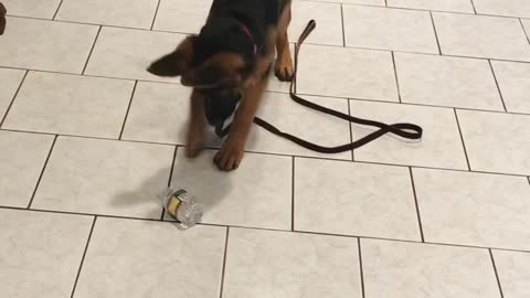 Curious Puppy Goes Extreme Attack Mode On Innocent Water Bottle