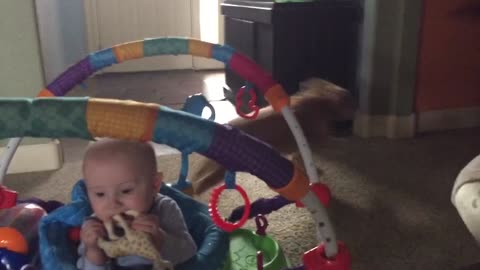 This Dog Can Fetch Diapers On Command!