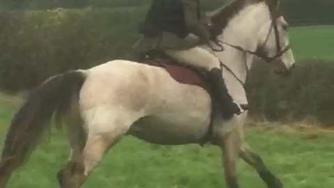 Horse forgets to jump!