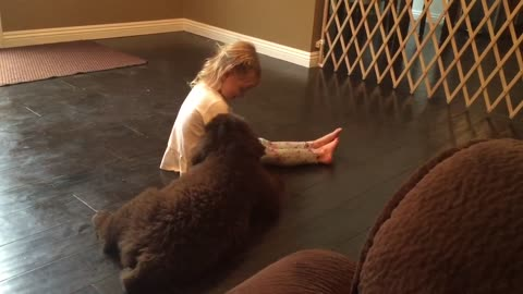 Little girl learns all about her new massive puppy