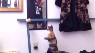 Mirror Kitten Climbing Fail