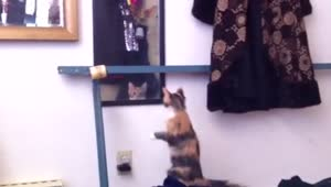 Mirror Kitten Climbing Fail - Video