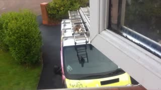 Little kitty does MASSIVE jump!!!! - Video