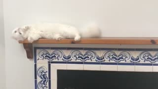 White cat accidentally falls off blue fireplace - Video