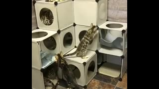 Cats and their labyrinth home - Video