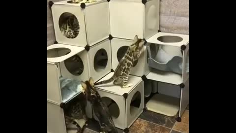 Cats and their labyrinth home