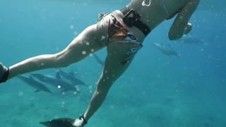 Swimming with a Pod of Dolphins