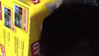 Cat head stuck in glad box - Video