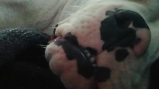 Filming my Dog In His Sleep IS So funny - Video