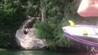 Guy black shorts rope swing lands on back - Video