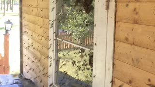 Bees Swarm To Get At Honey