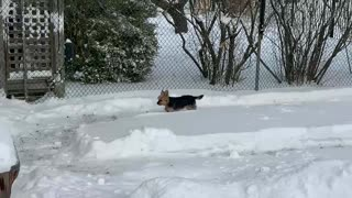Man builds epic backyard snow maze for his dog