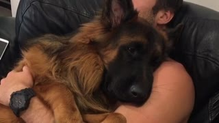 Puppy cuddles  - Video