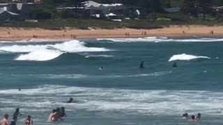 Guy tries to get on his surfboard but fails  - Video