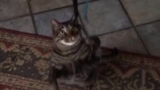 Slow motion cat catching string - Video
