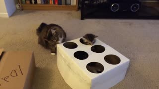 The real kitten Whack-A-Mole - Video