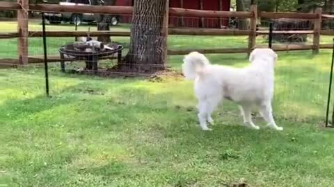 Squirrel Shows Some Serious Skills During Escape