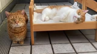 Super cute cats chill out on their custom beds