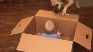 Funny Dog Pulling Baby Around in a Box