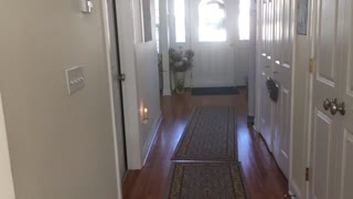 Dog loves fetching her favorite baby  - Video