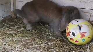 This movie will surprise you! Rabbit plays football like Messi.