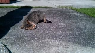 Cat rolling around in the sun is simply fantastic - Video