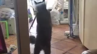 Cat and dog try to get each other  - Video