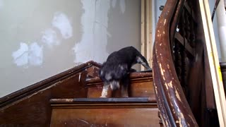 Dog Scared Of Stairs