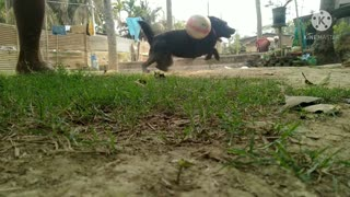How To Training A Dog To Play Football Dog playing football