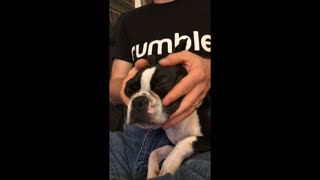 Puppy gets relaxation during facial massage