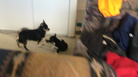 Cat loves jumping on his best friend