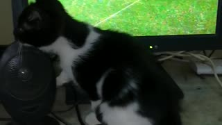 Kitty Adore Mo Salah Matches