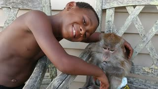 Monkey paralyzes boy with a simple touch  - Video