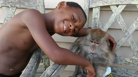 Monkey paralyzes boy with a simple touch