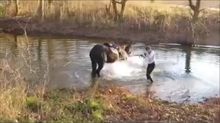 Horse Experiences His First Time In Water – Hilarious! - Video