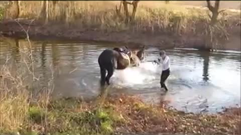 Horse Experiences His First Time In Water – Hilarious!