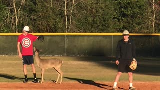 Kids Play Baseball with a Fawn - Video