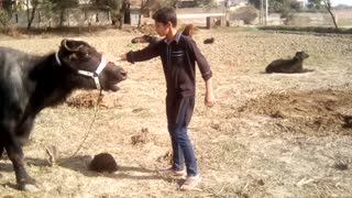Animal fun with boy.  - Video
