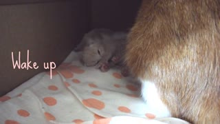 Mom Cat Pino and her Lovely Kittens, Look and Melt .... - Video