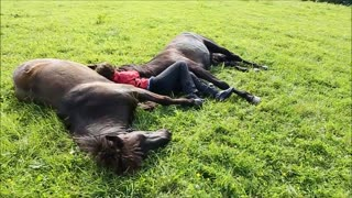 Woman lies down between two horses, but watch how the horses respond - Video