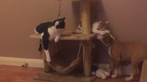 Cat, kitten and puppy share epic playtime moment